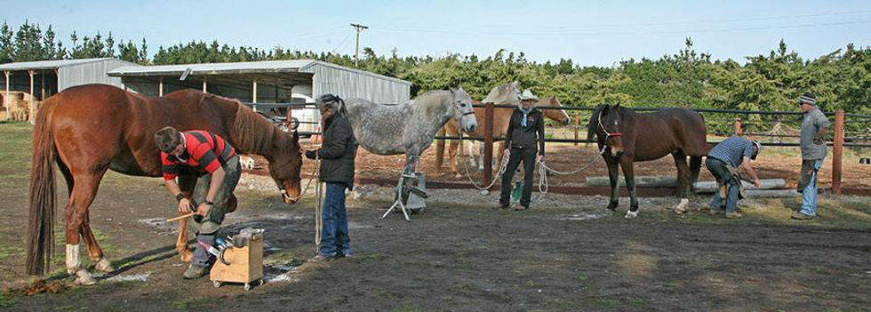 caring for the horses.jpg