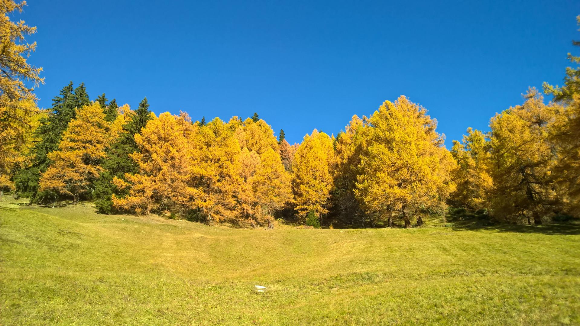 A_Herbst.jpg