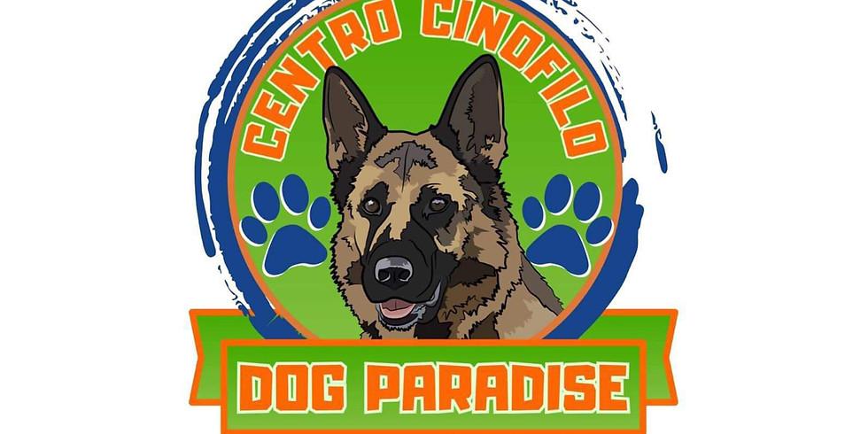 Dog Paradise -Show disc dog