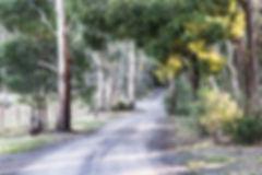Wombat Hollow 2.jpg