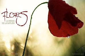 Flors Curs Fotografia Jordi Ferrando i Arrufat