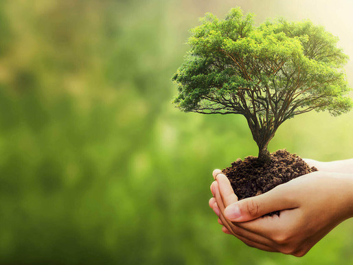 Eco-Friendly Landscape Ideas