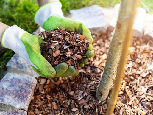 Using Fertilizer and Mulch in Your Garden
