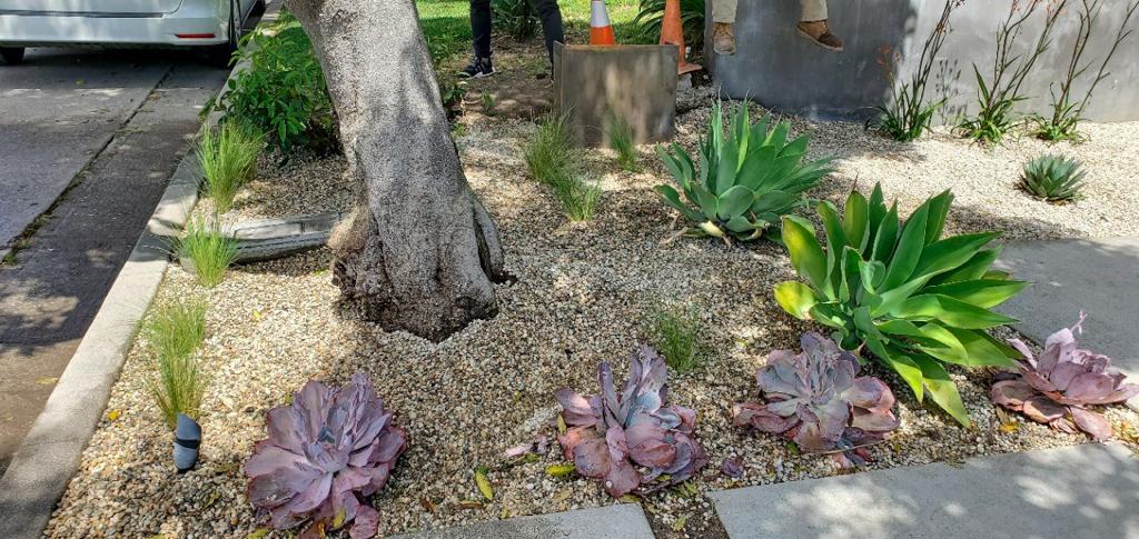 drought tolerant installation