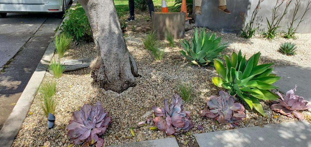 Drought Tolerant Garden