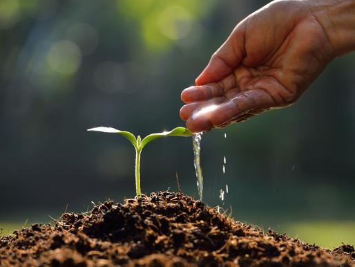 Proper Plant Irrigation