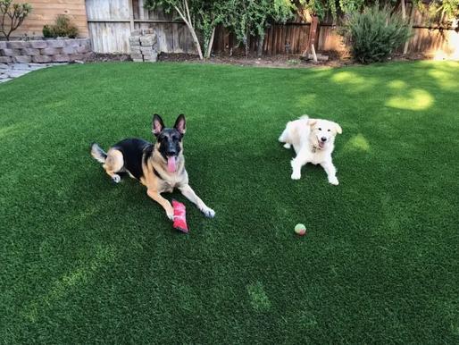 Dog-Friendly Landscape Tips for Your Yard