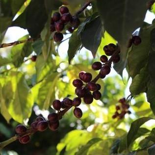 5 Ways to Celebrate International Coffee Day