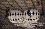 【新聞】高懸20公尺裝置藝術也不放過 桃機派蜘蛛人耗7小時清消