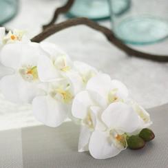 Orchids workshop  on 3rd October