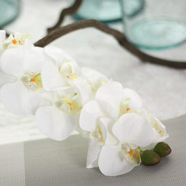 Orchids workshop  on 3rd October