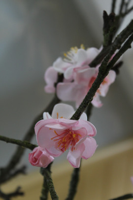 Cherry blossoms workshop on 7th March