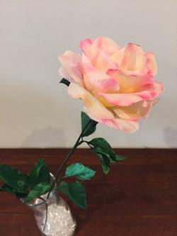 pink rose1.JPG