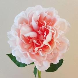 Peonies  workshop on 6th June