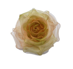 Roses workshop on 5th September