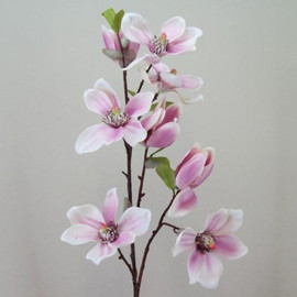 Magnolias Workshop on the 18th April