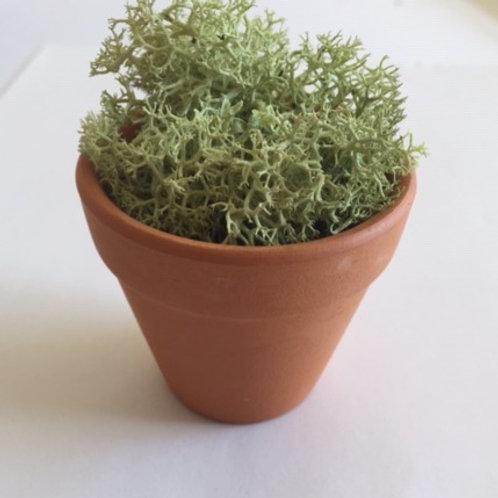 Miniature terracotta pot with reindeer moss