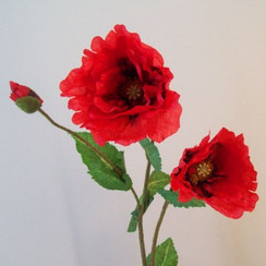 Poppies on 3rd November