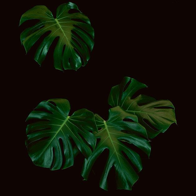 Hintergrundbild Pflanze