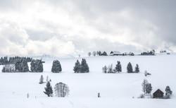 Schwantenau