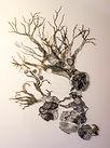 arbre-dessin-001.jpg