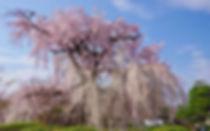 祇園+円山公園