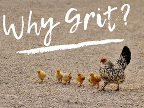 Why You Should Be Offering Grit To Your Chickens