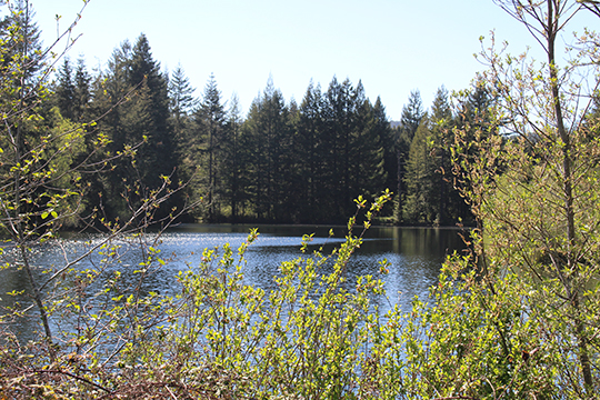 Lake View - Del Norte Golf - Website