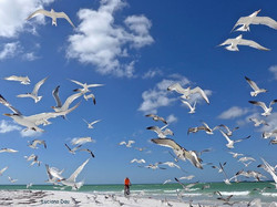 The rider and the seagulls