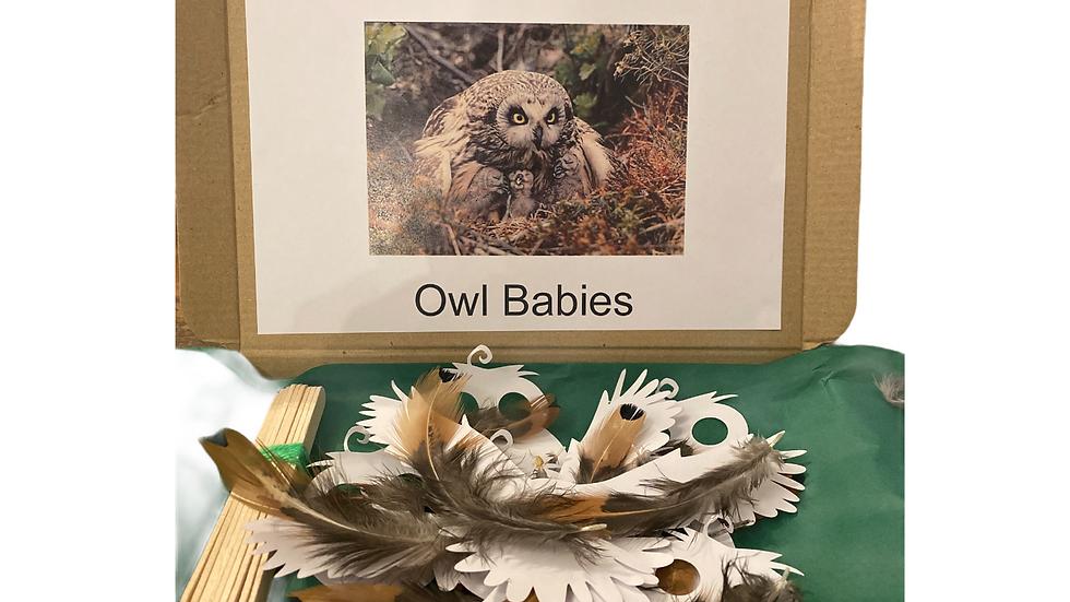 Owl Babies Letterbox Surprise
