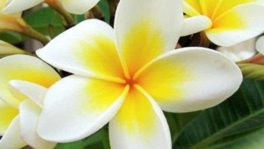 Bougie monoï de tahiti