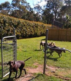 doggy farm stay play 7