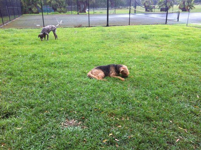 dog shelters.jpg