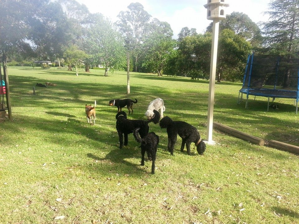 dog friendly parks sydney.jpg