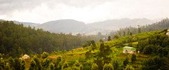 Nilgiri_Hills - Copy.jpg