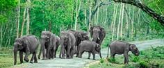 Bandipur-National-Park.jpg