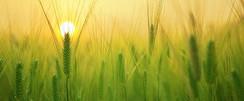 landscape-nature-grass-growth-plant-sun-