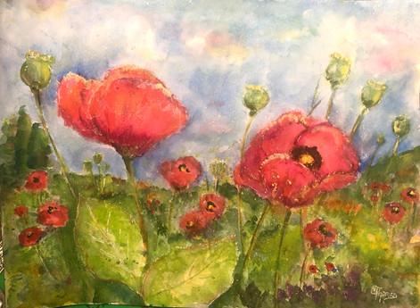 Poppies in Monet's Garden