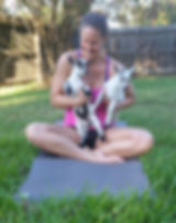 Houston Goat Yoga Texas