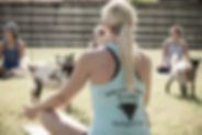 Houston Goat Yoga Texas