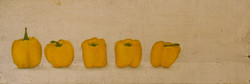 5 yellow peppers