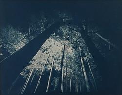 boodle hole/trees