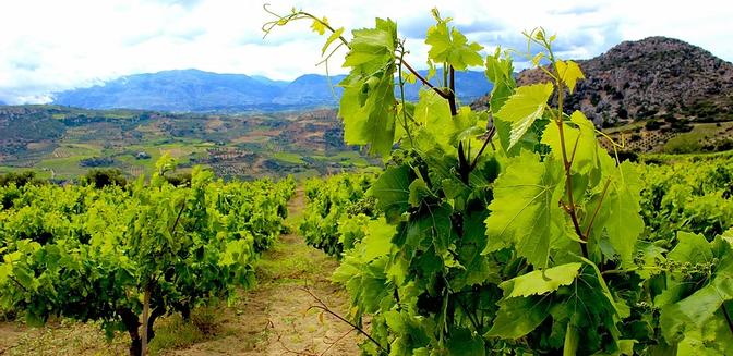 winenot.webp