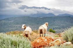 Rural Crete