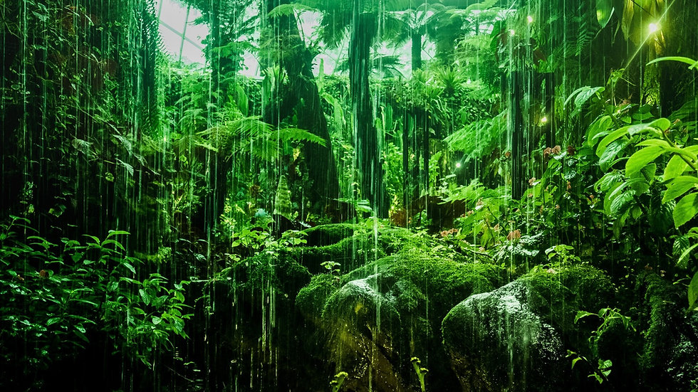 Rainforest smbolizing calmness after grief counselin near philadelphia 19102