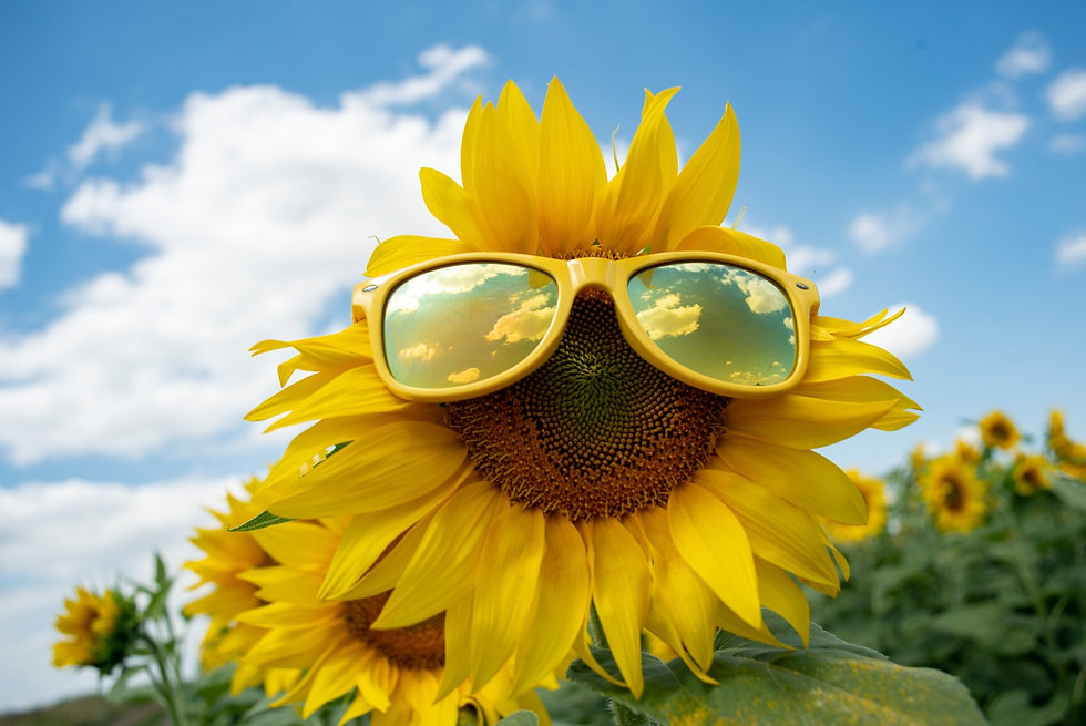 Open Home Health Aide Positions Sunflower