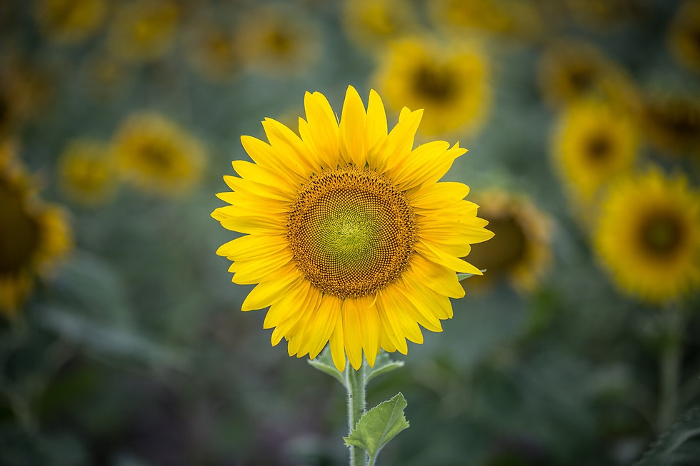 Sunflower Home Health Care in Glenolden PA