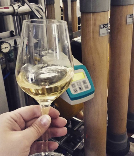 Pinot Grigio quality check....jpg