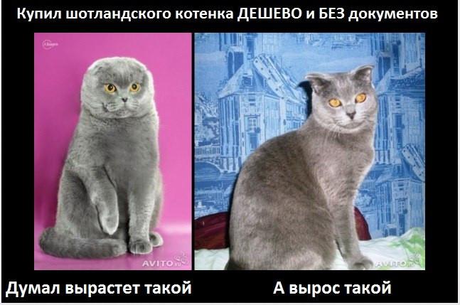 купили котенка дешево и без документов