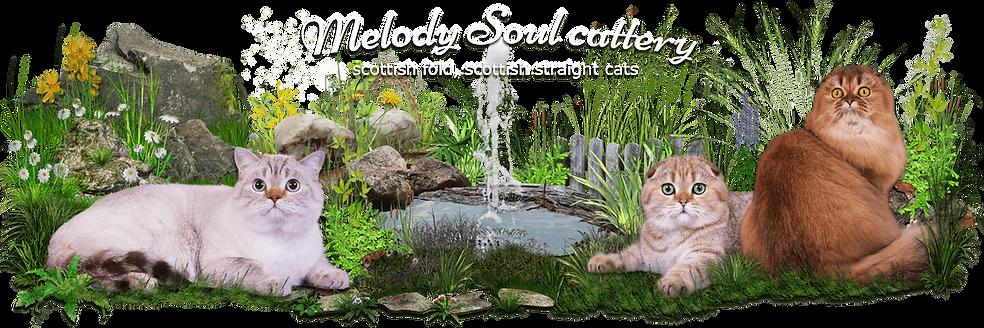 купить котенка,вислоухие котята,шотландские котята,шотландская кошка, казань